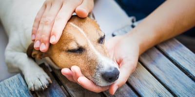 Dog seizures: signs and what to do