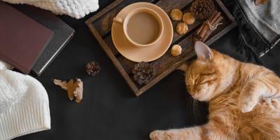 gatto-mangia-crocchette