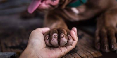ayudar a perros callejeros durante la cuarentena