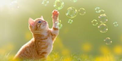 gatto-gioca-con-bolle-di-sapone