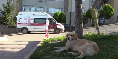 cane e ambulanza