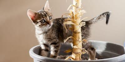 Kätzchen im Blumentopf von Yuccapalme