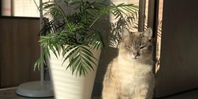 Chamaedorea elegans und Katzen: Ist die Bergpalme giftig?