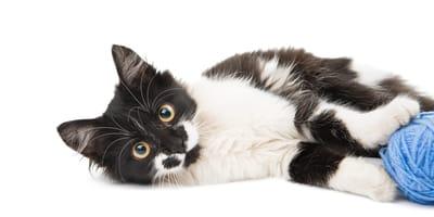Sprytne gry i zabawy z kotem - poznaj nasze pomysły!