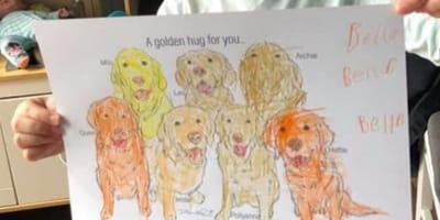 Children can colour in their paw-traits!