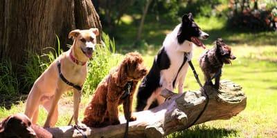 La personalità del tuo cane secondo il suo segno zodiacale!