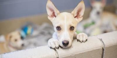 Czy epidemia to dobry moment na adopcję psa lub kota?