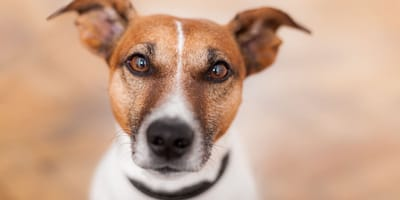 Kidney infection in dogs