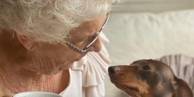 Kobieta adoptuje jamnika. Kiedy pies poznaje jej babcię, wszystko się zmienia