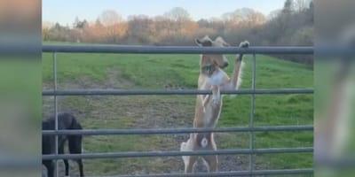 cane-in-piedi-di-fronte-a-recinzione