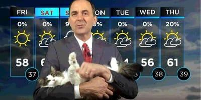 Weatherman's cat