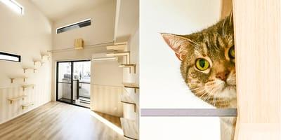 mieszkanie-dla-singla-z-kotem