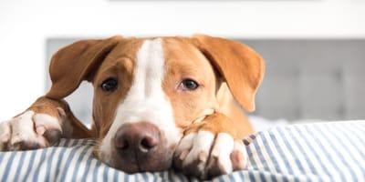 Mi perro está nervioso por la noche: pasos a seguir para tranquilizarlo