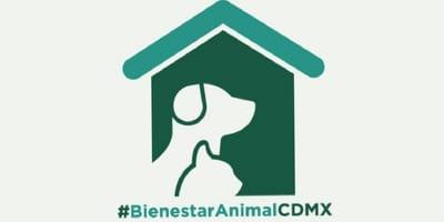 cdmx campaña para proteger mascotas