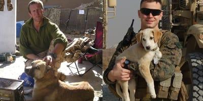 soldato accarezza un cane e soldato con cagnolino in braccio