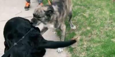 The best friends enjoyed an unexpected reunion