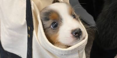 This puppy pics will make you smile