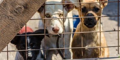 L'appello degli animalisti al Governo per rilanciare le adozioni