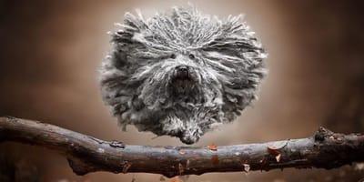 Niezwykłe zdjęcia Claudio Piccoli. Takich fotografii psów jeszcze nie widzieliście!
