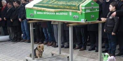 Zachowanie tego pieska podczas pogrzebu opiekuna, poruszyło serca internautów na całym świecie