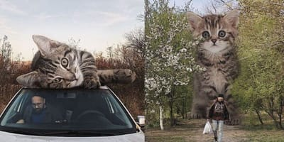 Artist creates images that show a purrfect world where cats are giants