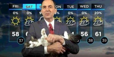 Betty_kot_pogodynka