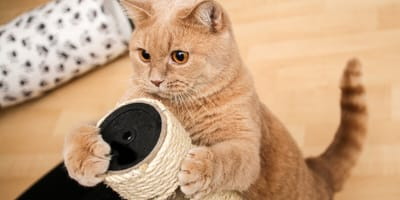 Rascador para gatos: evita, de una vez por todas, que tu gato destroce tus muebles