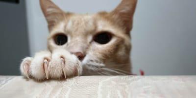 Cómo hacer un rascador para gatos