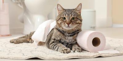 Cómo quitar el olor a orina de gato: elimínalo definitivamente