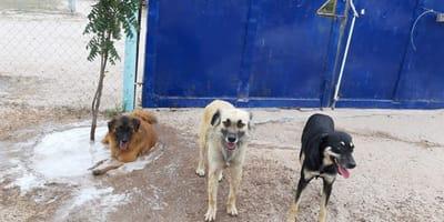 perros refugio