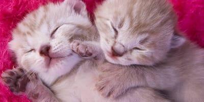 gatitos ojos cerrados cuando abren los ojos los gatos