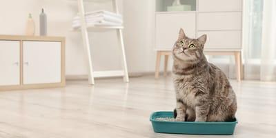 Arenero para gatos: claves para elegir el mejor
