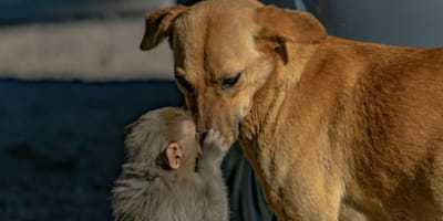 A dog and monkey are now best friends