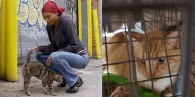 mujer cuida gatos callejeros
