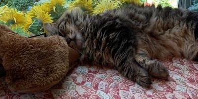 Lulu the tabby cat
