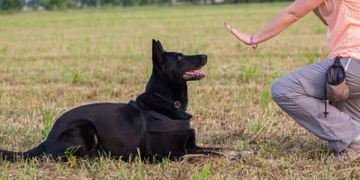 Rally Obedience  – Der Hundesport mit dem Extra an Spaß