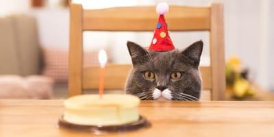 edad de los gatos en años humanos