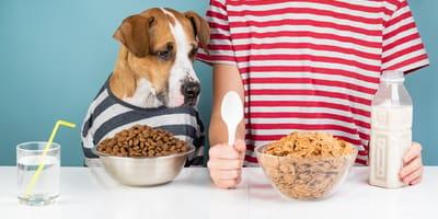 puede mi perro comer cereal