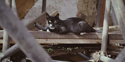 ¿Qué es un gato feral y cómo puedo ayudarlo?