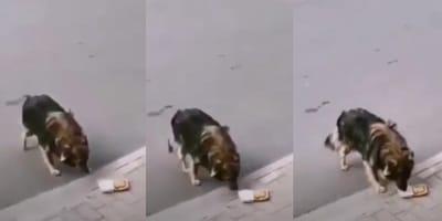 Perro hamburguesa