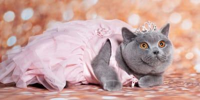 10 nombres para gatitas de princesas Disney