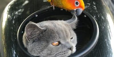 Kot i papuga.
