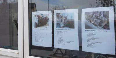 tre-fogli-con-immagini-di-gatti