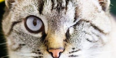 In quarantena, adottano un gatto: ore dopo, i volontari sono di stucco