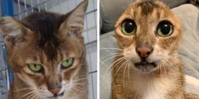Po utracie ukochanej właścicielki i uszu, ten kotek ma wreszcie szansę na szczęśliwe życie!