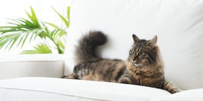 Kentia-Palme: Harmlos oder giftig für Katzen?