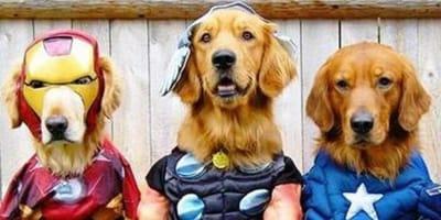 Nombres para perros grandes inspirados en superhéroes