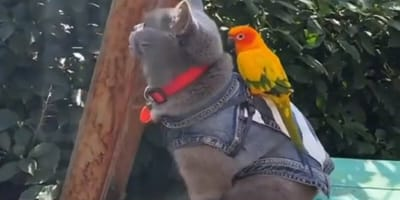 Bird perches on cat's back, and feline's reaction is unbelievable