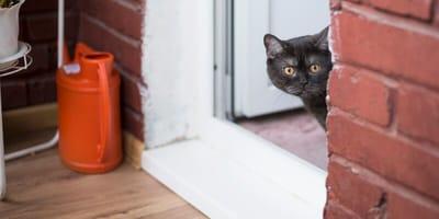 Kot wraca ze spaceru. Kiedy opiekunka widzi jego sierść, natychmiast chwyta za telefon