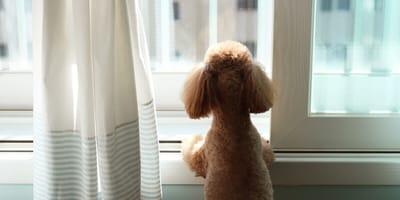 Ansiedad por separación con el desconfinamiento: consejos del psicólogo canino de la Reina Isabel